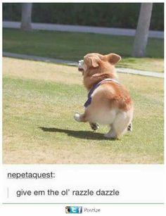 Corgi Memes That Will Brighten Your Day! Corgi Meme, Corgi Dog, Dog Memes, Dog Cat, Cute Funny Animals, Funny Animal Pictures, Cute Baby Animals, Funny Cute, Funny Dogs