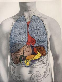 Antique 1920s Medical Diagram Scientific Print Human Anatomy LUNGS LIVER Chest