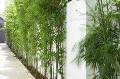 Randwick Landscape Architecture by Secret Gardens - Sydney Landscape Architects Tropical House Plants, Tropical Garden, Landscape Architecture, Landscape Design, Garden Design, Outdoor Gardens, Indoor Outdoor, Outdoor Spaces, Modern Tropical