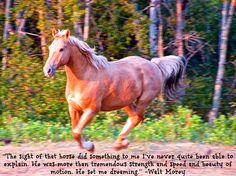 Horses set us to dreaming...  Montana Horse Trailers