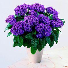 10 kauneinta kesäkukkaa Balcony Plants, Pink And Purple Flowers, Perfect Plants, Types Of Soil, Nautilus, Flower Seeds, Perennials, Bloom, Garden