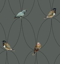 Brunklaus behang birds
