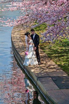 Cherry Blossom Wedding Theme Ideas