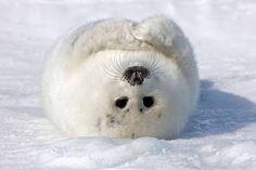 Buongiorno Link: I 10 animali più teneri dell'anno