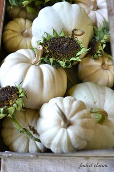 Fall display with whit pumpkins and dried out sunflower pods..so refreshing