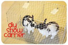 How To Build a Transport Cage for Show Rabbits | Bull Rock Barn and Home