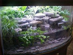 Gorgeous terrarium/water set up for amphibians Aquatic Turtle Tank, Turtle Aquarium, Aquatic Turtles, Turtle Pond, Turtle Tanks, Fish Tanks, Aquarium Aquascape, Planted Aquarium, Aquascaping