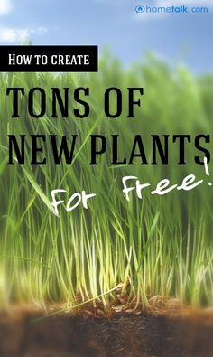 How to create TONS of {New Plants} for {Free!}