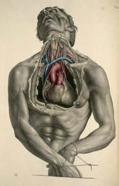 Exposure of the heart and its great vessels from 'Surgical Anatomy' by Joseph Maclise, 1856.