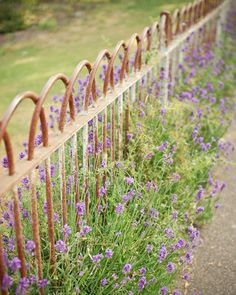 Lavender along a statement fence. Simple and very pretty.