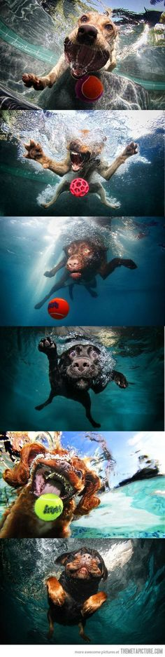 Dogs. Catching. Tennis Ball. Underwater. Awesome!