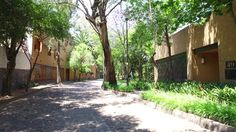 Video Full, México City, Stock Footage, Mexico, Street, Videos, Plants, Download Video, Plant