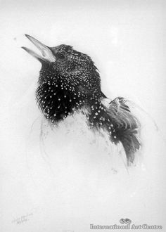 Study for Starling 'Winter Song'