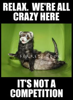 Ferret entertainment