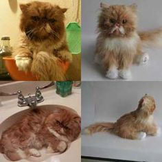 100% custom stuffed animals made to look just like YOUR pet! They're called Cuddle Clones : ) This is Jeff the Persian and his Cuddle Clone : )