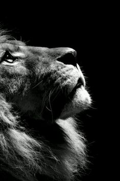 Jesus roars like a lion!!!!!!!!!!!!!!!! Wake up in the presence of the Lord with all your mind, soul, and body!