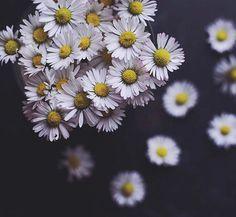 Flowers, beauty, blo