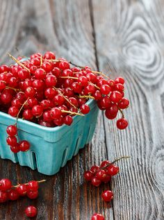 Red currant | Flickr
