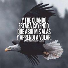 Las Águilas enseñan a sus polluelos a partir sin mirar atrás.