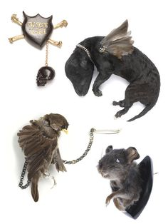 Brooches by Julia DeVille: Disce Mori, Stillborn puppy with pigeon wings, Rat-trophée,  Sparrow
