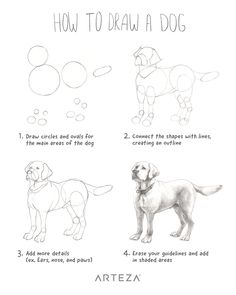 Want to learn how to draw a realistic dog? See how you can make an easy drawing of a dog with this simple step-by-step. Artist Credit: Arteza Team drawings watercolor How to Draw a Dog Skeleton Drawings, Pencil Art Drawings, Art Drawings Sketches, Cartoon Drawings, Easy Drawings, Animal Drawings, Dog Drawings, Drawing Drawing, Cartoon Dog