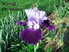 World Premier