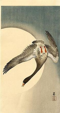 Flying white-fronted goose seen from underneath in front of the moon - Ohara Koson