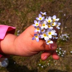 Tiny hands & tiny flowers <3