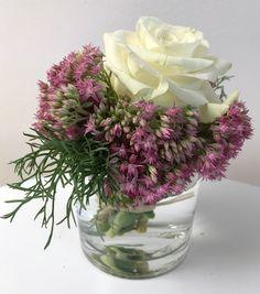 Fette Henne und weiße Rose in der Vase