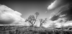Tree in the middle of the perfect storm by Miguel Páez