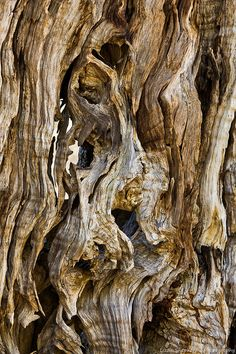 The Glorious Olive! Wood Patterns, Patterns In Nature, Textures Patterns, Natural Forms, Natural Texture, Art Grunge, Tree Bark, Tree Tree, Trees