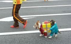 Great dog fancy dress outfit