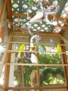 """Budgie aviary. Mr.Palisi's parlor is a """"conventional room, sparkling clean,... with a whole window filled with an aviary. #howtobuildanaviary"""