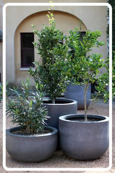 Courtyard Garden - Group three or more planter bowls to create interest and to soften your courtyard. Greenery can inc - Outdoor Planters, Outdoor Gardens, Outdoor Potted Plants, Courtyard Gardens, Concrete Pots, Courtyard House, Concrete Planters, Indoor Garden, Garden Pots