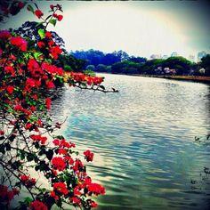 Parque do Ibirapuera - São Paulo #memoriasviajantes