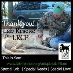 Special boy says thank you! Meet Sam...looking for his forever home. Very underweight...help him please http://www.lab-rescue.org/adoptalab#Sam