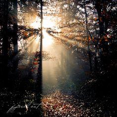 autumn light by Matthias Gaberthüel Autumn Lights, Celestial, Outdoor, Outdoors, Outdoor Games, The Great Outdoors