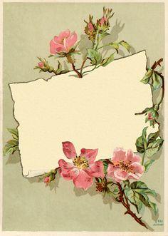 Vintage Borders and Frames | Vintage Rose Frame Images