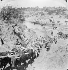 Oxen drawn column of the British Army carrying an artillery gun inch gun ?) across a river, possibly the Modder River. State Farm, St Helena, British Colonial, My Heritage, African History, British Army, Armed Forces, Cannon, Warriors