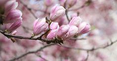 Här är vårens hetaste hårtrender