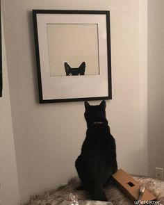 """Our cat is very confused with our new picture."" Happy #nationalpetday!"
