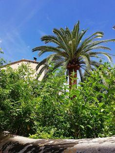 Plants, Photos, Heaven, Majorca, Nature, Plant, Planting
