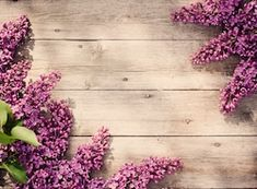 Find Beautiful Lilac On Wooden Background stock images in HD and millions of other royalty-free stock photos, illustrations and vectors in the Shutterstock collection. Love Wallpaper, Photo Wallpaper, Pattern Wallpaper, Wooden Background, Textured Background, Flower Backgrounds, Wallpaper Backgrounds, Camera Art, Nature Aesthetic