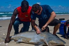 So You Want To Be A Shark Scientist?