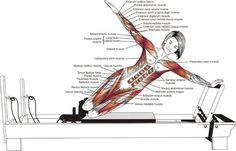 Pilates Reformer Anatomy