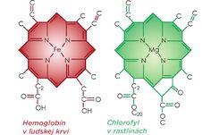 Štruktúra chlorofylu je veľmi podobá hemoglobínu v našej krvi. Centrálny atóm chlorofylu je horčík (zelený), zatiaľ čo centrálny atóm hemoglobínu je železo (červené).