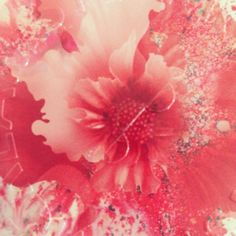 Beautiful rose inspired print artwork on our latest design. Shop now: www.steamcream.com/affection #rose #floral #pattern #affection #love #valentines #beautiful #beauty #vegan #steamcream #moisturiser