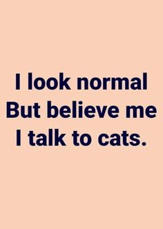 Cat Quotes, Animal Quotes, Words Quotes, Funny Quotes, Sayings, Funny Memes, Crazy Cat Lady, Crazy Cats, Victorious