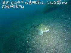 OOSEZAKI IZU Japan