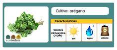 Atrévete a cultivar orégano en tu mesa de cultivo:  http://ecohortum.com/como-cultivar-oregano/